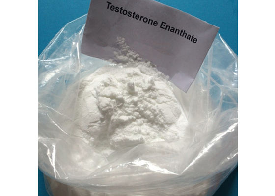 China Anabolic Steroid Testosterone Enanthate Raw Powder For Muscle Building CAS 315-37-7 supplier