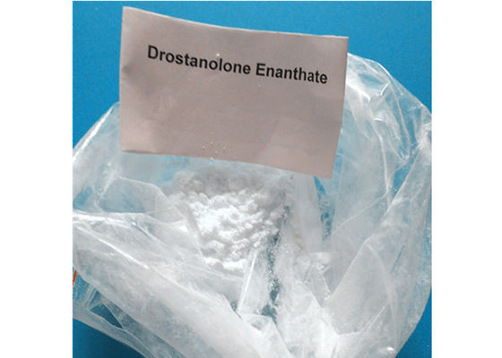 China Powerful Muscle Building Anabolic Androgenic Steroids , Drostanolone Enanthate Powder supplier