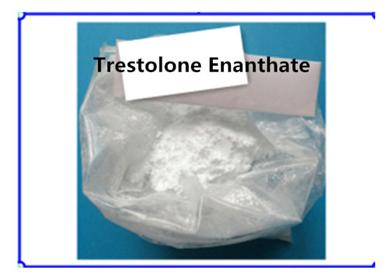 China Trestolone Enanthate Muscle Building Strong Effects USP Standard 99% Assay supplier